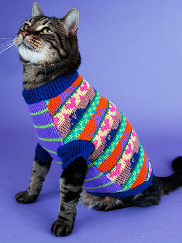 Clothing for cats   Pets-Wiki