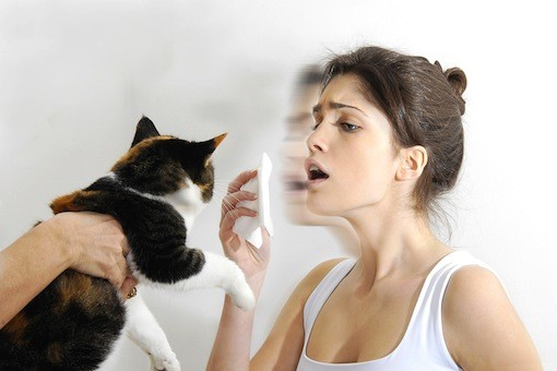 Cystitis in cats: treatment and prevention