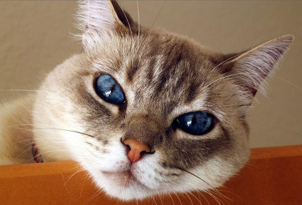 Allergy in cats