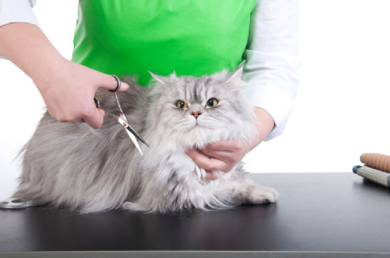 Cat grooming and hairstyles