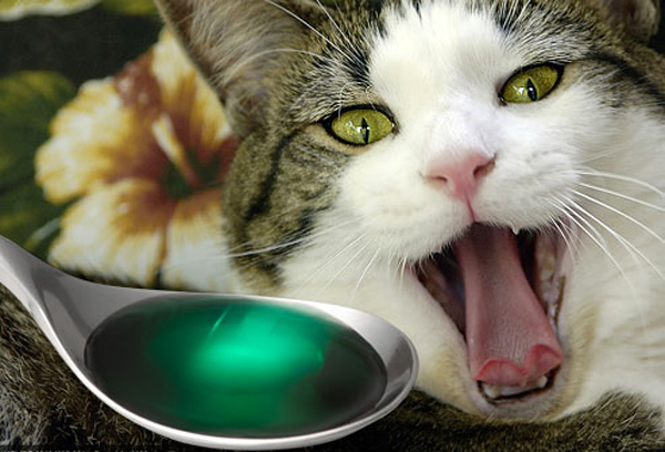 Poisoning in cats: symptoms and first aid