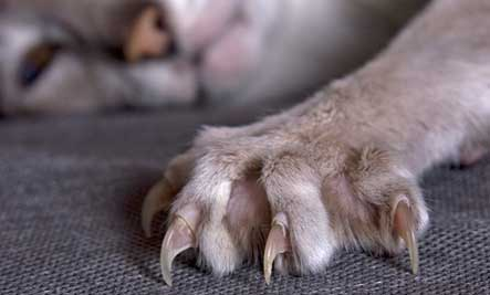 How to trim cat's nails?
