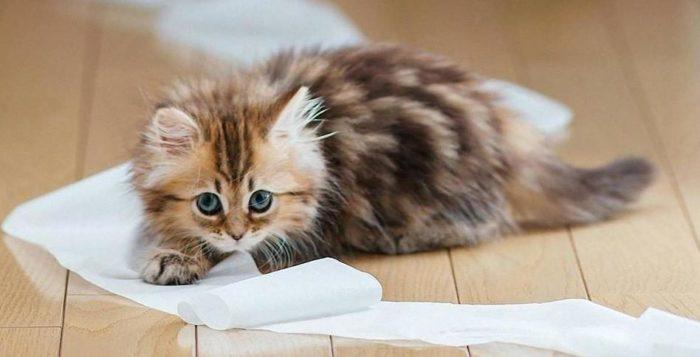 4 month old tabby kitten