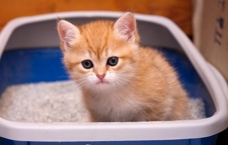 Yellow diarrhea in the kitten: causes and treatment | Pets-Wiki